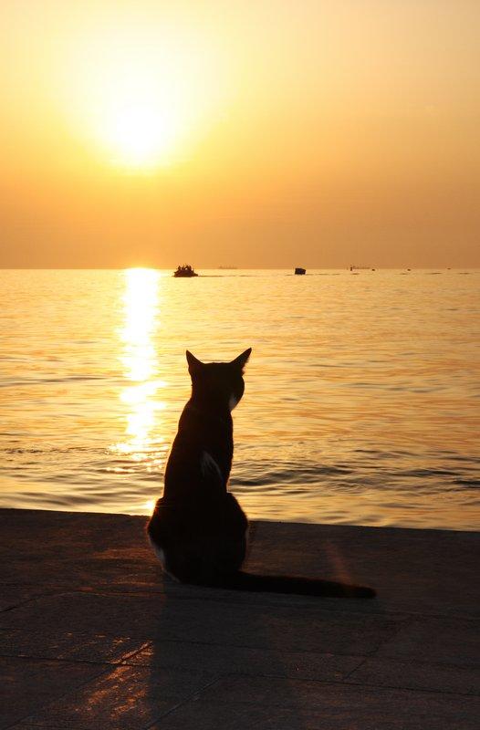 4print__MG_100_2031_cat