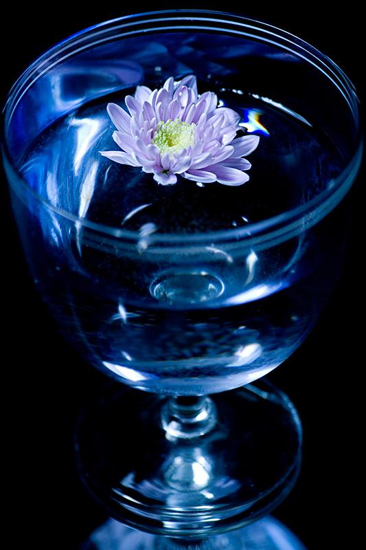 _MG_864_5777_flower